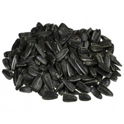 Słonecznik czarny 20 kg